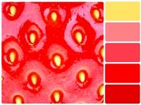 farbmischanlage wien